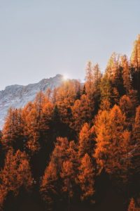 red-orange-fall-leaves-against-mountain
